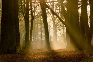 Sonnenharfen im Wald von Sabina Meerman