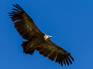Flying.. van José Verstegen