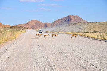 Thomson Gazelles van Robert Styppa