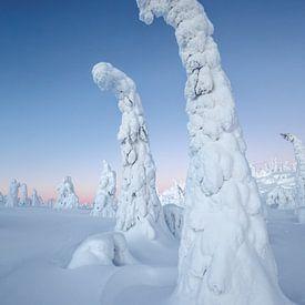 Boom met sneeuw bedekt van Menno Schaefer