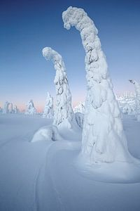 Boom met sneeuw bedekt