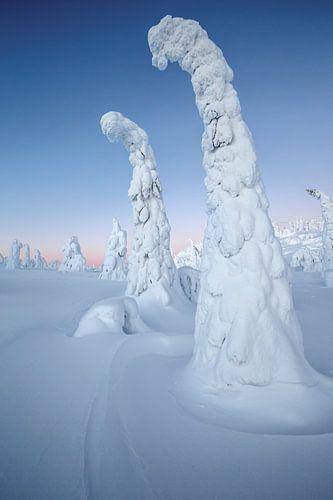 Boom met sneeuw bedekt van