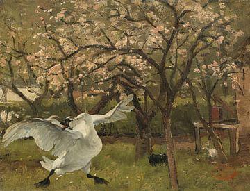 De bedreigde zwaan in de bloeiende boom in een boomgaard van Eigenwijze Fotografie