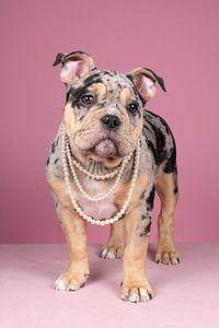 Porträt eines niedlichen Old English Bulldog Welpen vor einem rosa Hintergrund mit einer Perlenkette von Leoniek van der Vliet