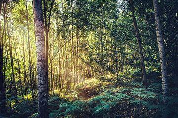 Een prachtig dicht bos in de felle zon- Polen in de zomer in Lubkowo van Jakob Baranowski - Off World Jack