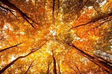 Autumn van