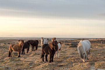 chevaux  sur Inge Jansen