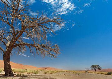 langs de weg in namibië van Ed Dorrestein