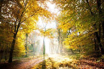 into the light von Lex Scholten