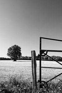 Achter het hek staat een eik, in zwart-wit