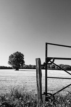 Achter het hek staat een eik, in zwart-wit van