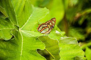 Vlinder op groene bladeren