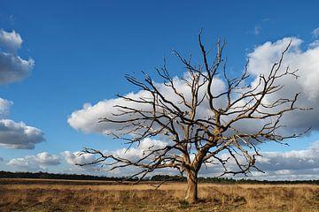 Wolken als Blätter von BHotography