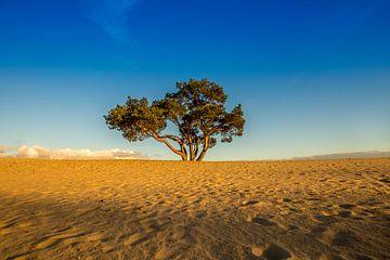 L'arbre solitaire sur Bart Verbrugge