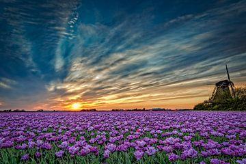 Uitgestrekte tulpenvelden in bloei van eric van der eijk