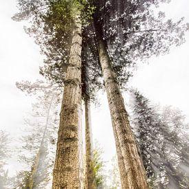 Tall Trees van Bob Daalder