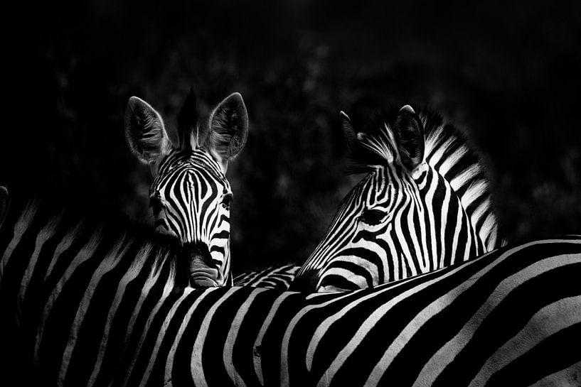 Zie je mij - zie ik jou van Sharing Wildlife