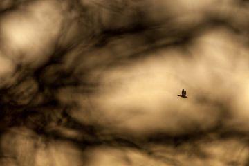 Vliegende Gans van Stijn Smits