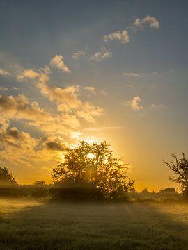 Morning glory van Diane van Veen