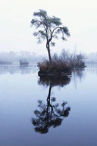 Les pools d'Oisterwijk sur Marjo Snellenburg