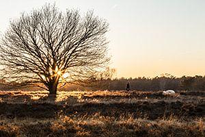 Zonsondergang op de heide (wandelaar) van Rosalie Oosterom