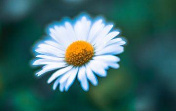 Blume2 von Wim de Vos