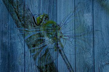 Libelle op hout van Johan Kalthof