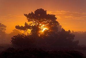 Sonnenaufgang in einer Natur