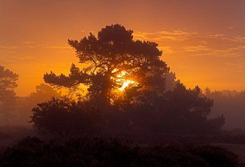 Sonnenaufgang in einer Natur von Anton de Zeeuw