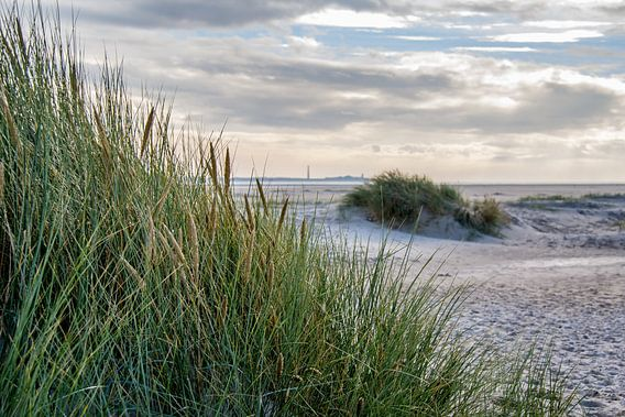 Texel - De Hors van Texel360Fotografie Richard Heerschap