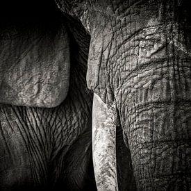 Detail van de slurf en een slagtand van een olifant van Marcel Bakker