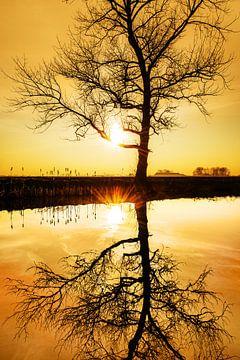 Spiegelboom van Harrie Muis