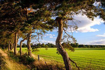 Bomen langs weiland van Johan Vanbockryck