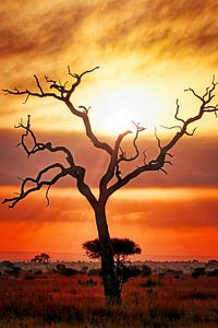 Nach dem Regen, Kruger NP Südafrika von