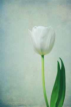Mooi in het wit van