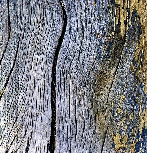 Was ooit een boom