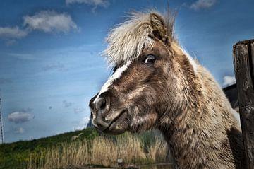 paard van Duo-Fotografie