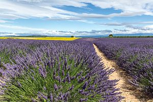 Lavendelveld bij Castellane van Peter Moerman