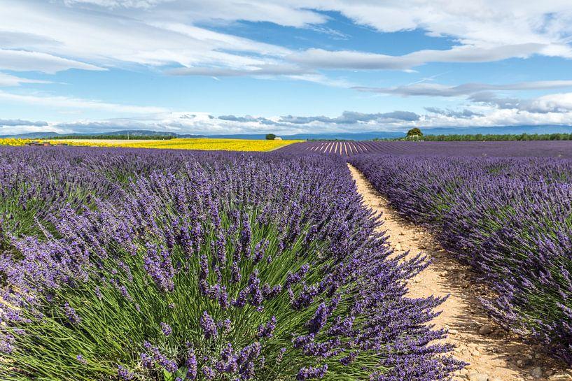 Lavendelveld bij Castellane sur Peter Moerman