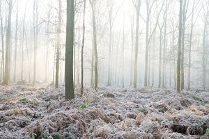 winter in het bos