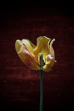 gelbe Tulpe mit farbigem Hintergrund von Ribbi The Artist