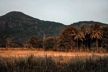 Sri Lanka von Fotoverliebt - Julia Schiffers