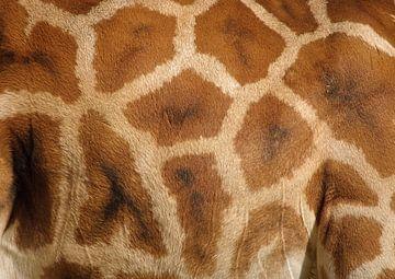 Giraffe von David Dirkx