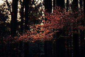 Herbstlicht von Maarten Mooijman