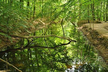 Wasserlauf Wald. von Walter Frisart