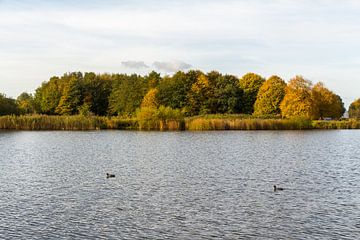 Waterpartij met oever, bomen en eenden von Jaap Mulder