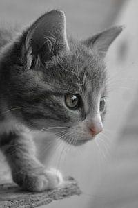 Kitten is watching you