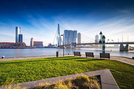 Kop van Zuid en de Erasmusbrug in Rotterdam