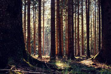 Forêt d'automne sur Oliver Henze