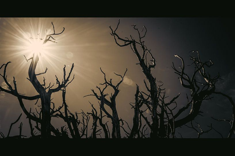 Trees of Bryce van Peter Nijsen